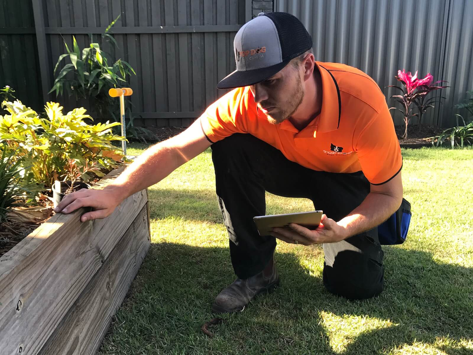 Outdoor Termite inspection