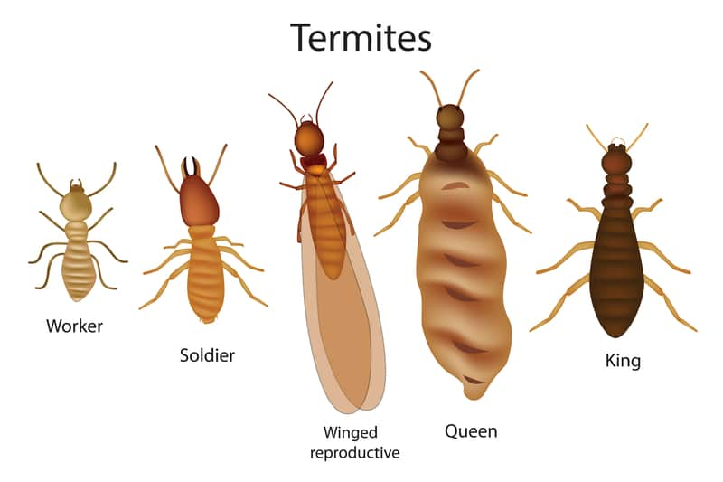 5 Signs of Termites Infestation - termite pest control gold coast